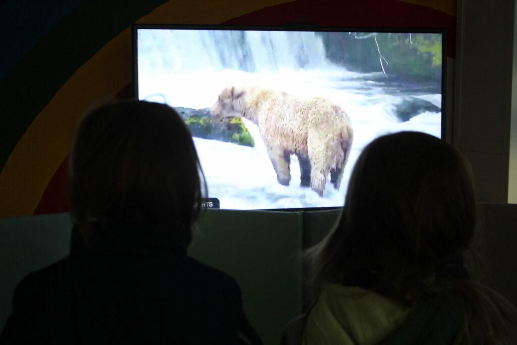 Gegen Corona Lockdown Langeweile: auf einem großen Fernsehbildschirm läuft ein Wildlife Livestream mit Bären. Vor dem Fernseher steht eine Matte als Absperrung. Zwei Kinder schauen zum Fernseher / zum Tier Gehege.